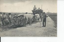 VERRIERES LE BUISSON   Etablissements Vilmorin  Dans Les Champs  1923 - Verrieres Le Buisson