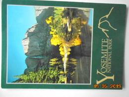Yosemite National Park. The Last Sunshine Of An Autumn Afternoon Spotlights A Golden Cottonwood Tree... Impact 2813 - Yosemite