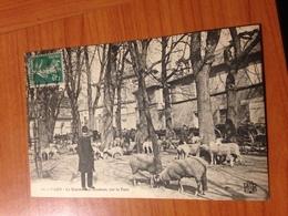 CAEN  -le Marché Aux Moutons Sur Le Parc (port à Ma Charge ) - Caen