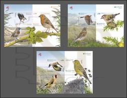 Aves Portugal EUROPA 2019 Birds Oiseaux Vögel Pájaros Uccelli Regullus Erithacus Serinus Luscinia Carduelis Tordo Turdus - Oiseaux