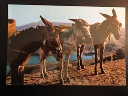 Animales Burro - Donkeys