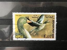 Afghanistan - Vogels (40000) 2000 - Afghanistan