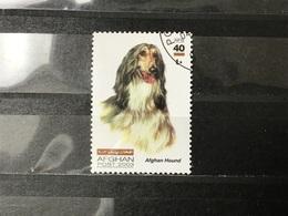 Afghanistan - Honden (40) 2003 - Afghanistan