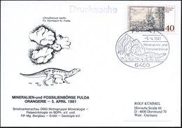 """6400 FULDA 1/ Mineralien-u.Fossilienbörse 1981 (5.4.) SSt = Saurier """"Chirotherium Barthi"""" (u. Felseni) Auf Motivgl. Sond - Géologie"""
