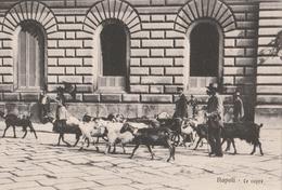 Cartolina- Postcard / Non Viaggiata - Unsent /  Napoli, Le Capre. - Napoli