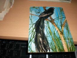 Long Tail Widow Bird, Kenya, By Air Mail - Animals