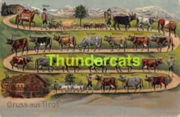 CPA EN RELIEF GAUFREE EMBOSSED VACHE COW AUSTRIA TIROL ALPES ( PLI - CREASE ) - Vaches