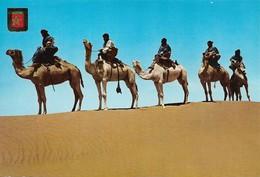 Maroc Caravane De Meharistas De M'Hamid (2 Scans) - Dieren
