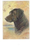 Cpm Illustration Chien Labrador Signé Ruane Mannine - Canard - Thème Chasse Aux Oiseaux - Perros