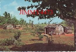 CPM Dentelées - PAYSAGE DES TROPIQUES - MARTINIQUE - N° 92724 - Edit. Pierre Milon - Martinique