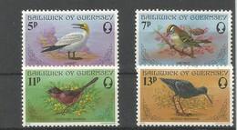 Vogels - Guernesey
