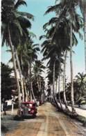 AFRIQUE NOIRE - CAMEROUN - DOUALA Allée Des Cocotiers - CPSM Dentelée Format CPA - Black Africa  Cameroon Kamerun - Cameroon