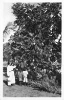 AFRIQUE NOIRE - CAMEROUN - L'ARBRE à PAIN - CPSM Dentelée Format CPA - Cameroon / Tree Bome Boom Albero árbol - Cameroon