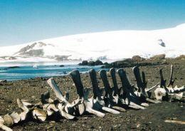 6 AK Antarktis * Forschungsstation Base Espaniola Gabriel De Castilla (Spanien) Deception Und Greenwich Island * - Postcards