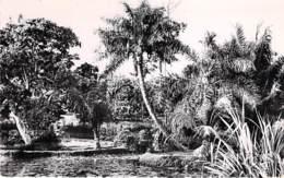 AFRIQUE NOIRE - CONGO - BRAZZAVILLE : Jardin D'Essais - Les Abords Du Petit Etang - CPSM Dentelée Format CPA - Africa - Brazzaville