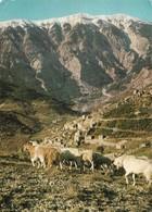 La Provence Brantes Et Le Mont Ventoux Avec Troupeau De Moutons (2 Scans) - Breeding