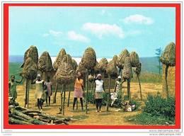 Angola - Secadouro De Amendoim - Séchage De L`Arachide Afrique Portugaise - Angola