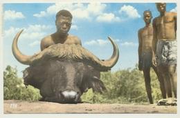 AK  Sudan Buffalo Head Native Dinder River Sudanese Men - Sudan
