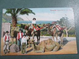 Tenerife . Transporte En Camellos - Tenerife