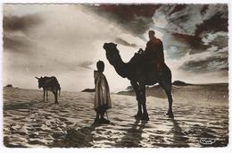 Crépuscule Au Sahara - Nr 1026  - Camel - Dromedaris  -  Kameel - Túnez