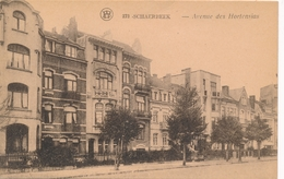 CPA - Belgique - Brussels - Bruxelles - Schaerbeek - Avenue Des Hortensias - Schaarbeek - Schaerbeek