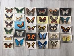 LOT De 30 CARTES Theme PAPILLONS - Papillon - Papillons