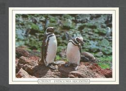 ANIMAUX - ANIMALS - CHUBUT PATAGONIA ARGENTINA - PUNTA TOMBO - PINGÜINO DE MAGALLANES - PINGUINS - 17x12 Cm  6¾x4¾ Po - Autres