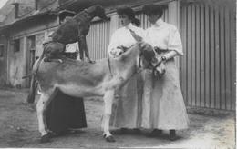1 CPA Photo 1907 Chien Sur âne Et 3 Jeunes Femmes - Postcards