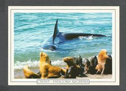ANIMAUX - ANIMALS - CHUBUT PATAGONIA ARGENTINA - PUNTA NORTE - ORCAS - KILLER WHALE - 17x12 Cm  6¾x4¾ Po - Poissons Et Crustacés