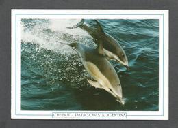 ANIMAUX - ANIMALS - CHUBUT PATAGONIA ARGENTINA - PENINSULA VALDES - DELFINES - DAUPHINS - 17x12 Cm  6¾x4¾ Po - Poissons Et Crustacés