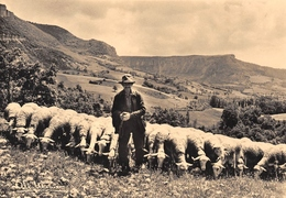 ROQUEFORT - Tel Philémon, Il Garde Ses Brebis - Berger - Moutons - Photo Albert Monier - Roquefort
