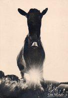 Albert MONIER - (1956) - édit:L.P.A.M. - Cartes Postales