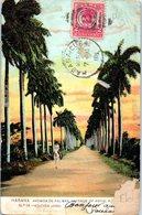 HABANA - Avenida De Palmas (état) - Cuba