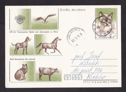 Poland: Stationery Postcard, 1985, Animal, Cat, Dog, Horse, Bird, Cow (traces Of Use) - Brieven En Documenten