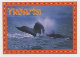 AI37 Animals - Yubarta, Humpback Whale - Animals