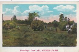 AR27 Greetings From All Angels Farm - Horses, Hay Making - NY - New York