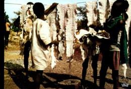 Afrique En Couleurs : Séchage Des Peuax De Serpents - Cartes Postales