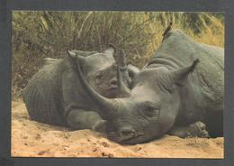 ANIMAUX - ANIMALS - TANZANIA RHINO AT NGORONGORO CRATER - RHINOCÉROS - 17½ X 12 Cm  7x4¾ Po BY SUPERGLOSS - Rhinocéros