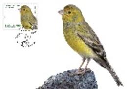 Portugal & Maxi Card, Europa CEPT, National Birds, Canario, Serinus Canaria,  Madeira, Funchal  2019 (8417) - Perroquets & Tropicaux