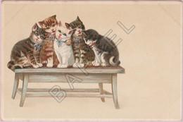 Cinq Chats Sur Un Banc (Recto-Verso) - Illustrateurs & Photographes