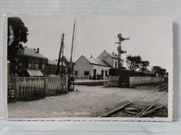 RARE. Paliseul. La Gare. Train. Photo Véritable. Mosa, Profondville - Paliseul