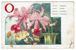 Carte Alphabet - O - Orchidées / Orchids / Orchideen / Orchideeën - Circ. En 1921 - 2 Scans - Fleurs
