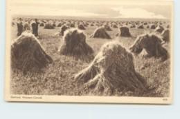 1932 Sepia View Card - Oatfield, Western Canada  #459 Unused - 1903-1954 Reyes