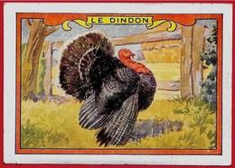 IMAGE LE DINDON ** Animaux - Vieux Papiers
