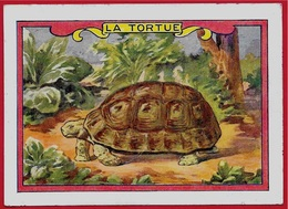 IMAGE LA TORTUE ** Animaux - Old Paper