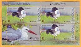 2019 Moldova Moldavie H-blatt  Europa-cept  Fauna, Birds, Storks - Storks & Long-legged Wading Birds