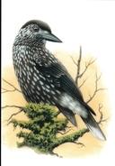 234. BUZIN. CASSENOIX MOUCHETE - Oiseaux
