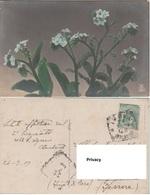 Fiori Flowers - Fiori