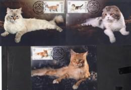 Kirgistan Kyrgyzstan MNH** 2019  Domestic Cats  Mi 125-127 Max - Kirgisistan