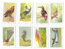 Vers 1950 - Lot De 47 Images Des Sirops Deschiens (seules 8 Scannées) Toutes Différentes - FRANCO DE PORT - Vieux Papiers